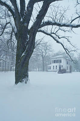 House And Big Tree In Snow Art Print by Jill Battaglia