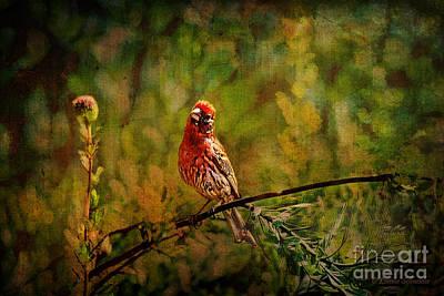 Finch Digital Art - House Finch Tapestry  by Lianne Schneider