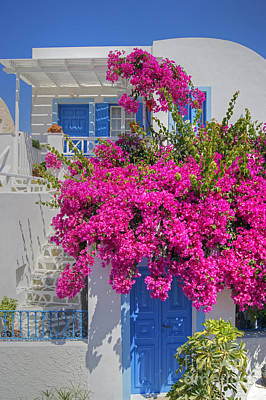 House Of Bougainvillea Art Print