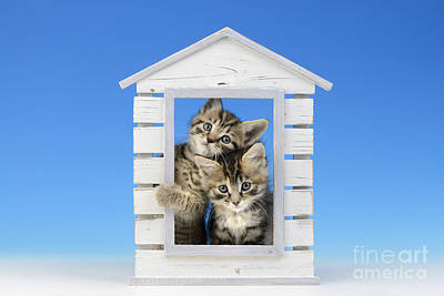 Shed Digital Art - House Of Kittens Ck528 by Greg Cuddiford