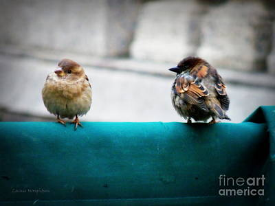 House Sparrows Print by Lainie Wrightson