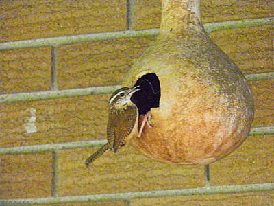 Book Quotes - House Wren Feeding The Brood by Nick Kirby