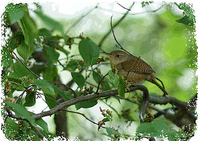 Photograph - House Wren  II by Margie Avellino