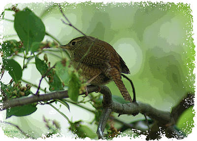 Photograph - House Wren  IIi by Margie Avellino