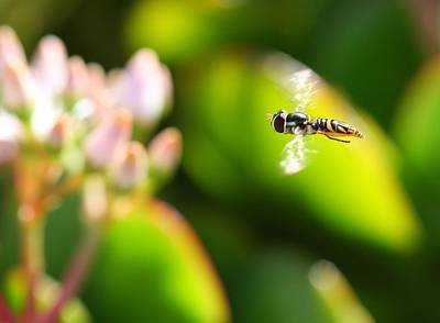 Photograph - Hoverfly by Nathan Rupert