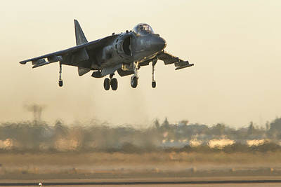 Photograph - Hovering Harrier by Jim Moss