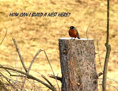 Nest Digital Art - How Can I Build A Nest Here? by Will Borden