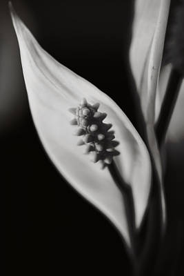 Stamen Photograph - How Can We Let It Slip Away? by Laurie Search