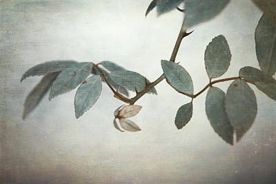 Vine Leaves Photograph - How Delicate This Balance by Laurie Search