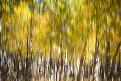 Icm Photograph - How Did I Get Here by James BO  Insogna