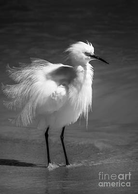 Egret Landscape Photograph - How Do I Look- Bw by Marvin Spates