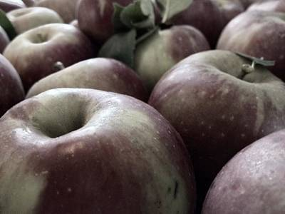 How Do You Like Them Apples Art Print by Photographic Arts And Design Studio