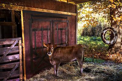 How Now Brown Cow? Art Print by Debra and Dave Vanderlaan