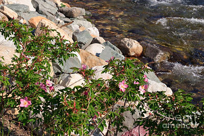 Photograph - How Rose Creek Gets Its Name by Charles Kozierok