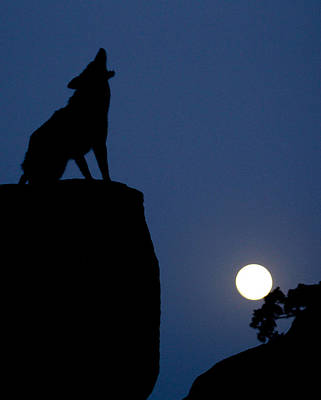 Photograph - Howl by Diane Bohna
