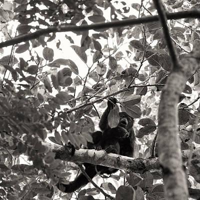 Photograph - Howler Mokeys Punta Laguna by For Ninety One Days