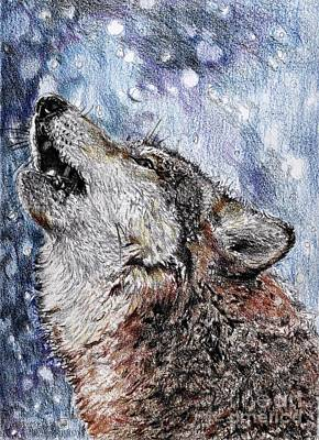 Drawing - Howling Gray Wolf by J McCombie