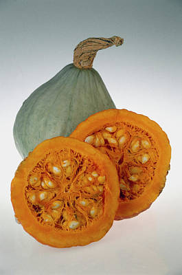 Maxima Wall Art - Photograph - Hubbard Squash by Sally Mccrae Kuyper/science Photo Library