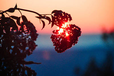 Photograph - Huckleberry Sunset by Michael Courtney
