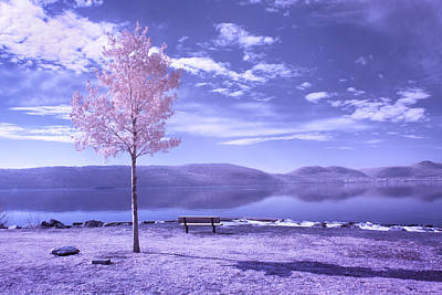 Photograph - Hudson River Tree And Bench by Dave Beckerman
