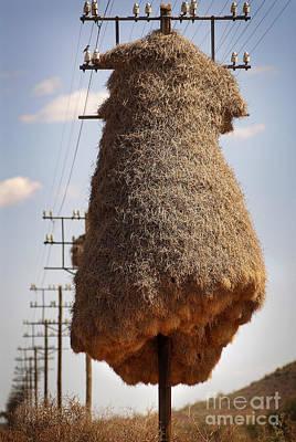 Huge Birds Nest On Pole Art Print