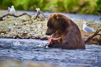 Uncle Sam Posters Rights Managed Images - Huge brown bear in creek eating salmon Royalty-Free Image by Dan Friend