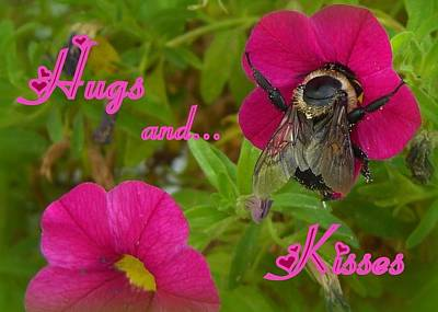 Photograph - Hugs And Kisses by Heidi Manly