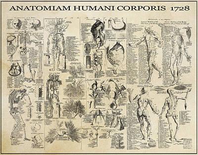 Body Map Digital Art - Human Anatomy 1728 by Daniel Hagerman