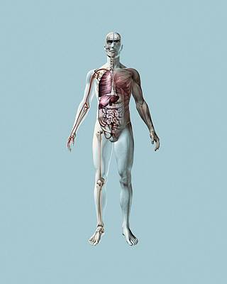 Physiology Photograph - Human Anatomy by Mikkel Juul Jensen