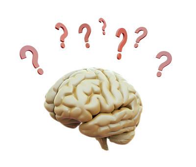 Internal Organs Photograph - Human Brain And Question Marks by Andrzej Wojcicki