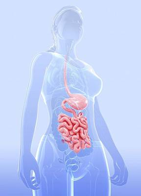 Biomedical Illustration Photograph - Human Digestive System by Pixologicstudio