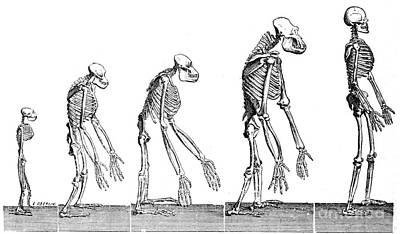 Human Evolution 1883 Art Print by British Library