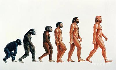 Human Evolution Print by David Gifford