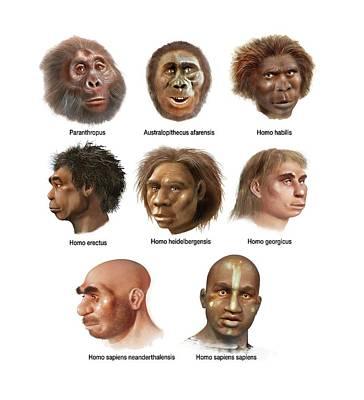 Early Human Photograph - Human Evolution by Jose Antonio Pe�as