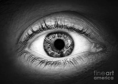 Eyelash Photograph - Human Eye by Elena Elisseeva