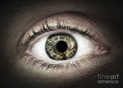 Eyelash Photograph - Human Eye Macro by Elena Elisseeva