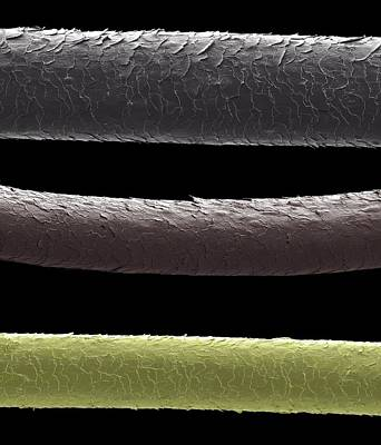 Trio Photograph - Human Hairs by Steve Gschmeissner