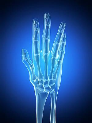 Biomedical Illustration Photograph - Human Hand Anatomy by Sebastian Kaulitzki