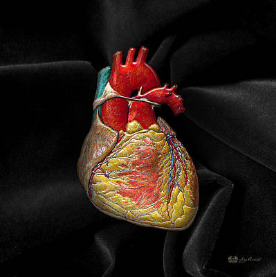 Autopsy Digital Art - Human Heart On Black Velvet by Serge Averbukh