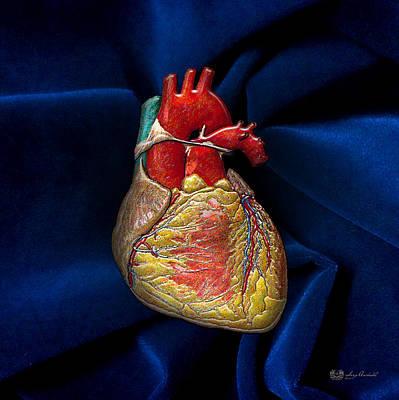 Autopsy Digital Art - Human Heart On Blue Velvet by Serge Averbukh
