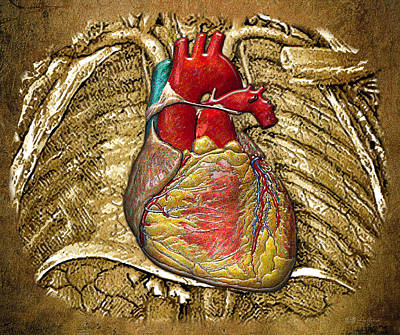 Autopsy Digital Art - Human Heart Over Vintage Chart Of An Open Chest Cavity by Serge Averbukh