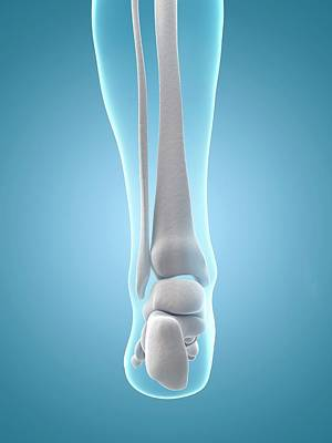 Human Heel Bones Art Print by Sebastian Kaulitzki