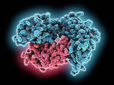 Oxidation Photograph - Human Immune System Complex Molecule by Laguna Design