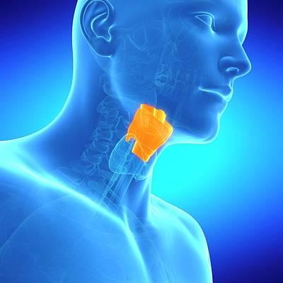 Biomedical Illustration Photograph - Human Larynx by Sebastian Kaulitzki