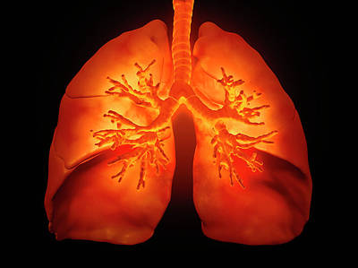 Bright Colours Photograph - Human Lungs by Andrzej Wojcicki