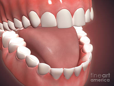 Human Mouth Open, Showing Teeth, Gums Art Print by Stocktrek Images