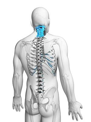 Biomedical Illustration Photograph - Human Neck Bones by Sebastian Kaulitzki