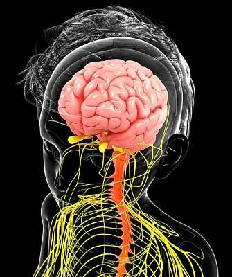 Biomedical Illustration Photograph - Human Nervous System by Pixologicstudio