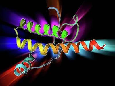 Medical Illustration Photograph - Human Prion Precursor Protein by Laguna Design