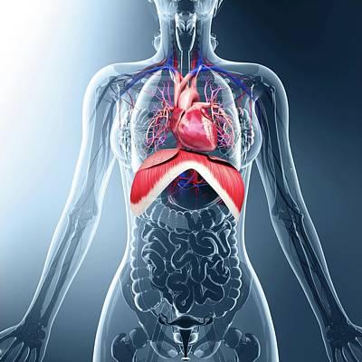 Human Respiratory System Art Print by Pixologicstudio